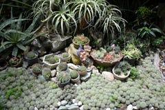 Экзотические заводы показанные в предпосылках г-на Резиденция ` s Виктории dela Александра на Matanao, Davao del Sur, Филиппинах Стоковое Изображение