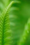 экзотические папоротники Стоковые Фотографии RF