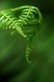 экзотические папоротники Стоковое Фото