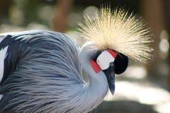 Экзотические птицы с красивыми пер Стоковая Фотография