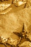экзотические раковины Стоковые Фотографии RF