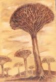 Экзотические редкие деревья Эскиз нарисованный рукой баобаба Стоковая Фотография