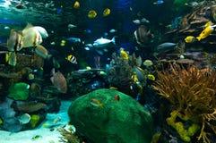 Экзотические рыбы в аквариуме Стоковое Фото