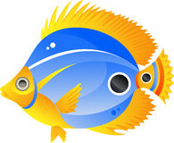 экзотические рыбы Стоковые Изображения