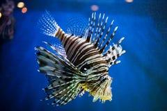 Экзотические рыбы Стоковое фото RF