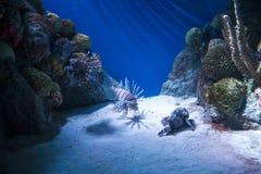 Экзотические рыбы Стоковые Изображения RF