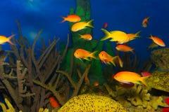 экзотические рыбы Стоковая Фотография