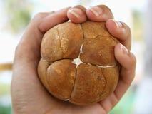 экзотические семена ладони Стоковая Фотография