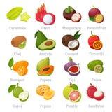 Экзотические тропические плодоовощи установленные с именами иллюстрация вектора