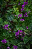 Экзотические фиолетовые цветки 3 группы Стоковые Изображения RF