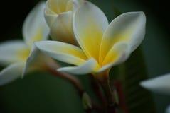 экзотические цветки в Кипре Стоковые Изображения