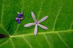 Экзотические цветки на зеленых тропических лист природа предпосылки зеленая Стоковое Фото