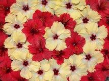 экзотические цветки тропические стоковое изображение rf
