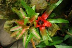 экзотические цветки Стоковые Фото