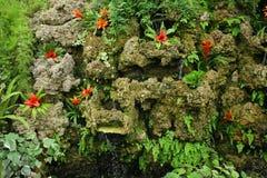 экзотические цветки Стоковое фото RF