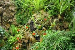 экзотические цветки Стоковые Изображения RF