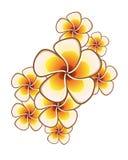 экзотические цветки Стоковое Изображение