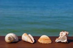 Экзотические seashells на деревянной поверхности на заднем плане se Стоковые Фото