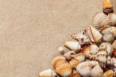 Экзотические seashells на песке волейбол лета пляжа шарика предпосылки красивейший пустой Взгляд сверху, полисмен Стоковая Фотография RF