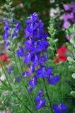 Экзотический голубой цветок Стоковые Изображения