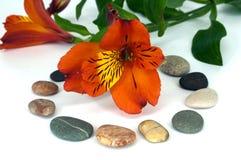 экзотический красный цвет орхидеи Стоковые Изображения