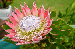 Экзотический крупный план цветка в саде Стоковые Фотографии RF