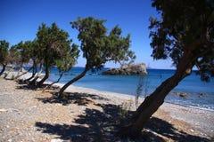 Экзотический пляж с деревьями стоковая фотография