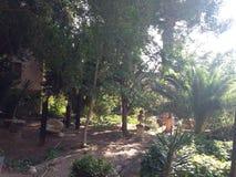 экзотический сад стоковое изображение