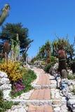 экзотический сад Стоковое Фото
