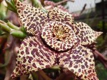 Экзотический цветок дома Стоковая Фотография RF