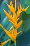 Экзотический цветок, предпосылка тропической природы листвы темная ая-зелен, винтажный тон стоковое фото