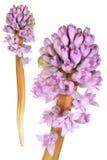 экзотический цветок Стоковые Изображения