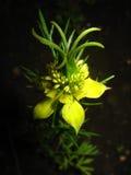 экзотический цветок Стоковое Изображение