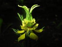 экзотический цветок Стоковые Фото