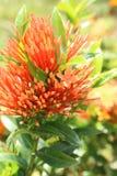 экзотический цветок Стоковая Фотография