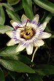экзотический цветок Стоковое Фото