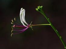 экзотический цветок Стоковая Фотография RF