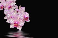 экзотический shimmer стоковое фото rf