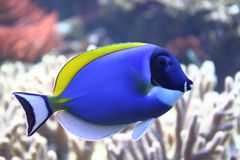 экзотическое море рыб стоковые фото