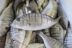 экзотическое море рыб Стоковое Фото