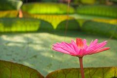 экзотическое тропическое Стоковое фото RF