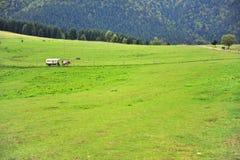 Экипаж в зеленой долине, Словакия лошади стоковые фото