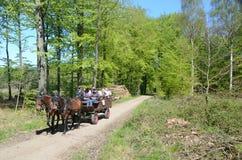 Экипаж лошади в лесе весны Стоковое Изображение