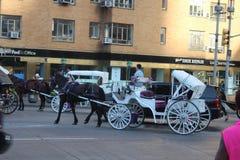 Экипаж лошади едет на центральном парке Нью-Йорке стоковое фото rf