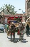 Экипаж лошадей Стоковое Фото
