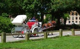 Экипаж лошади при лошади путешествуя через парк стоковое изображение rf