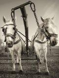 Экипаж лошади Стоковая Фотография