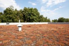 Экологическая зеленая плоская крыша стоковое изображение