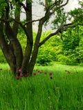 экологический лужок стоковое изображение rf
