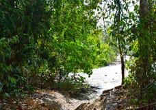 Экологический туризм - трек через вечнозеленый тропический лес - пляж слона, остров Havelock, Андаманские острова, Индия стоковые фотографии rf